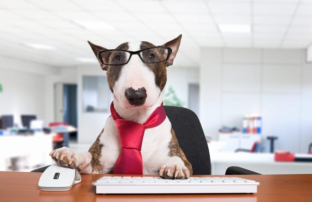 Computer pup